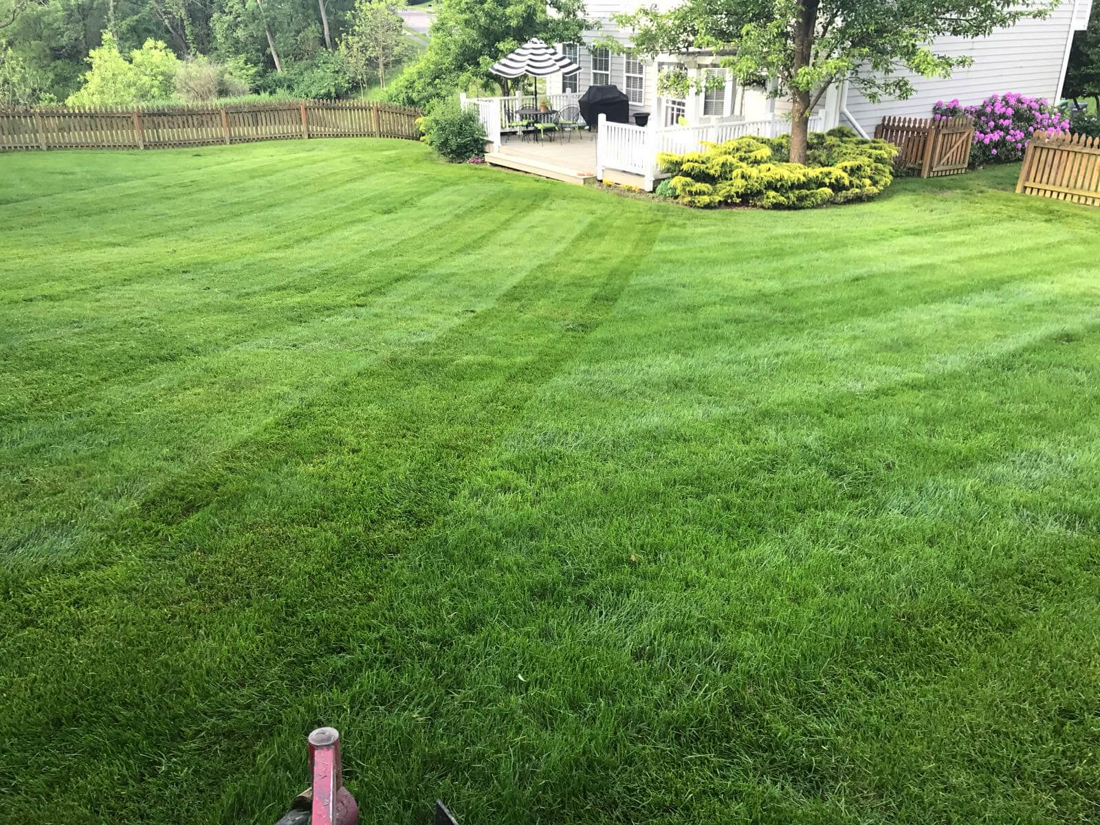 grass cutting  u0026 lawn maintenance