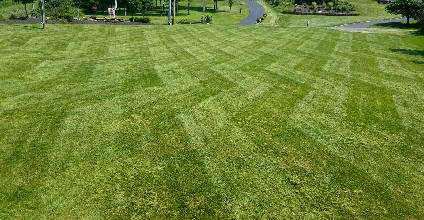 Grass Cutting Amp Lawn Maintenance Treesdale Landscape Company