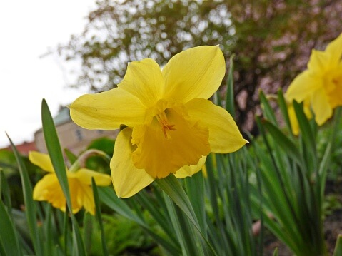 Spring Landscaping Pittsburgh