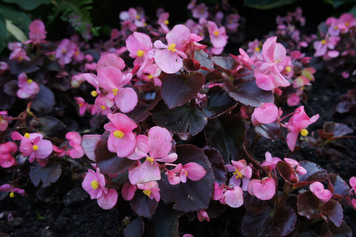 Flowers for Lansdscaping